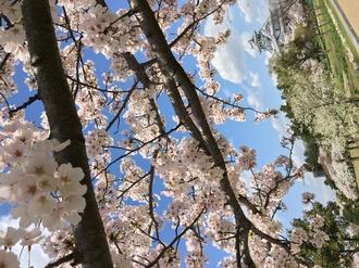 桜百選の名所を楽しんだ後はびわこレストランROKUへ!